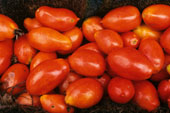 PlumTomatoes