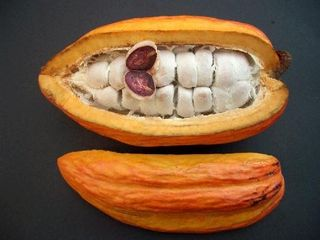 Cacao-chocolate-bean