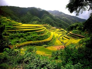 China-Rice-Terraces-Guangxi