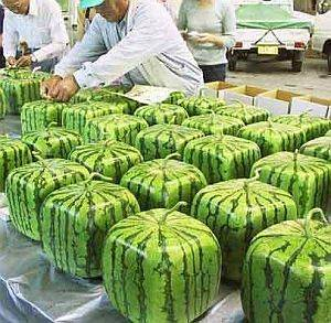 Square_watermelon1