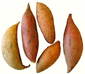 Sweet_potatoes_275