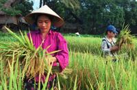 Vietnamfarmerwoman