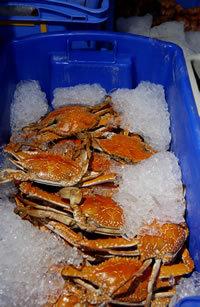 Crab_crate