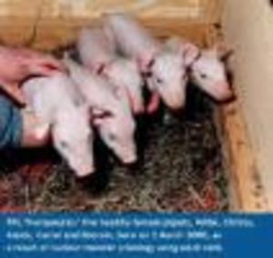 Pigclones